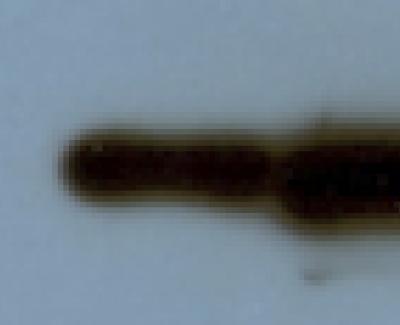 Anti-GFP Monoclonal Antibody (clone GF28R) 500 ul