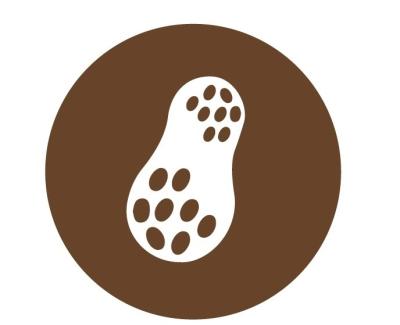 Peanut in Chocolate