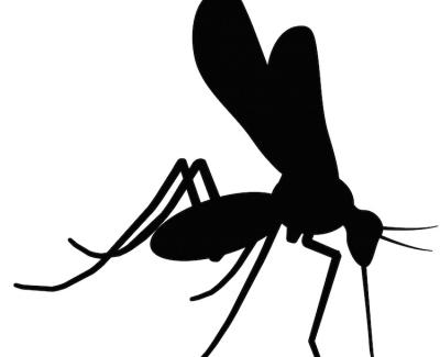 Zika NS5 Mab 6A1 500 ug