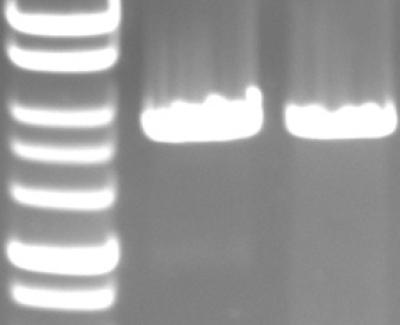 mycBioID2-pBabe-puro